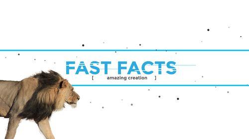 Fast facts banner with Lion walking into view