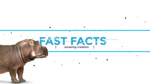Fast facts banner with Hippo walking into view
