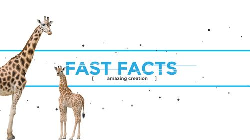 Fast facts banner with Giraffes walking into view