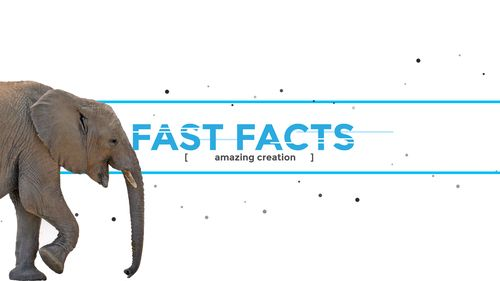 Fast facts banner with Elephant walking into view