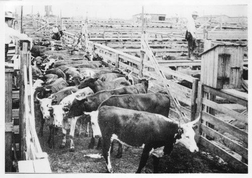 Ft Worth Stockyards c. 1960