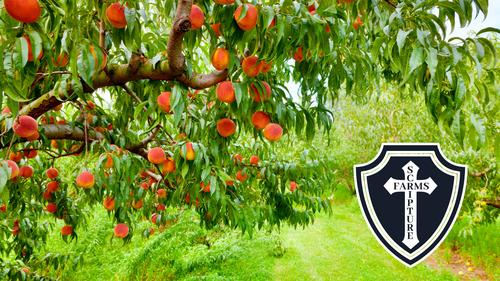 Scripture Farms Peaches Overton Texas