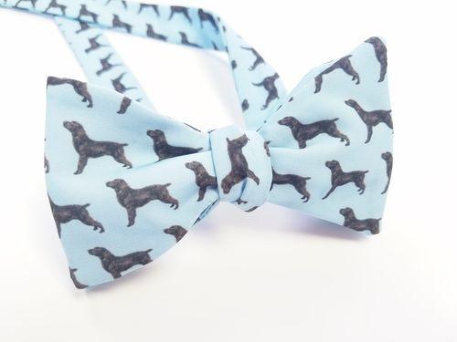 boykin spaniel bow tie