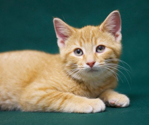 All Cats Rescue Sioux Falls Sd