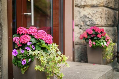 Container gardens filled with hydrangea, petunias, and ivy in front of a home